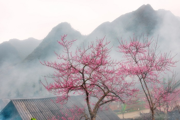 Ngắm hoa đào nở ở Hà Giang