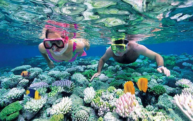ngắm san hô ở đảo cát bà