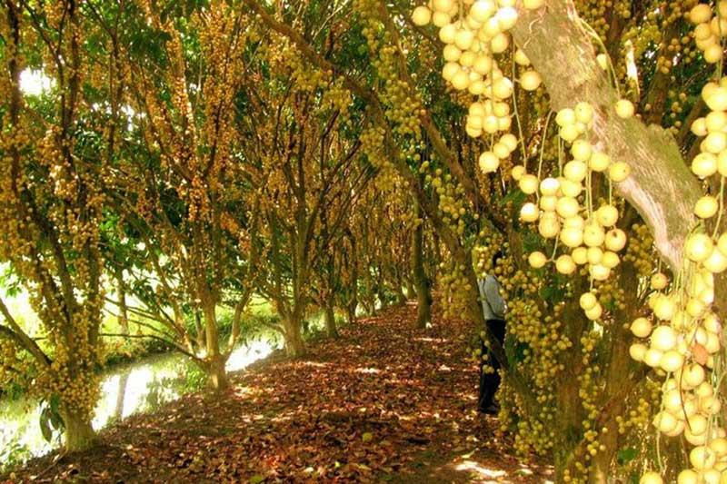 du khách hứng thú khi tới thăm vườn trái cây cái mơn